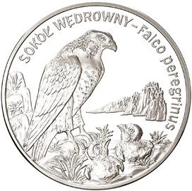 20 злотых 2008 - Сапсан / 20 zlotych 2008 Sokol Wedrowny